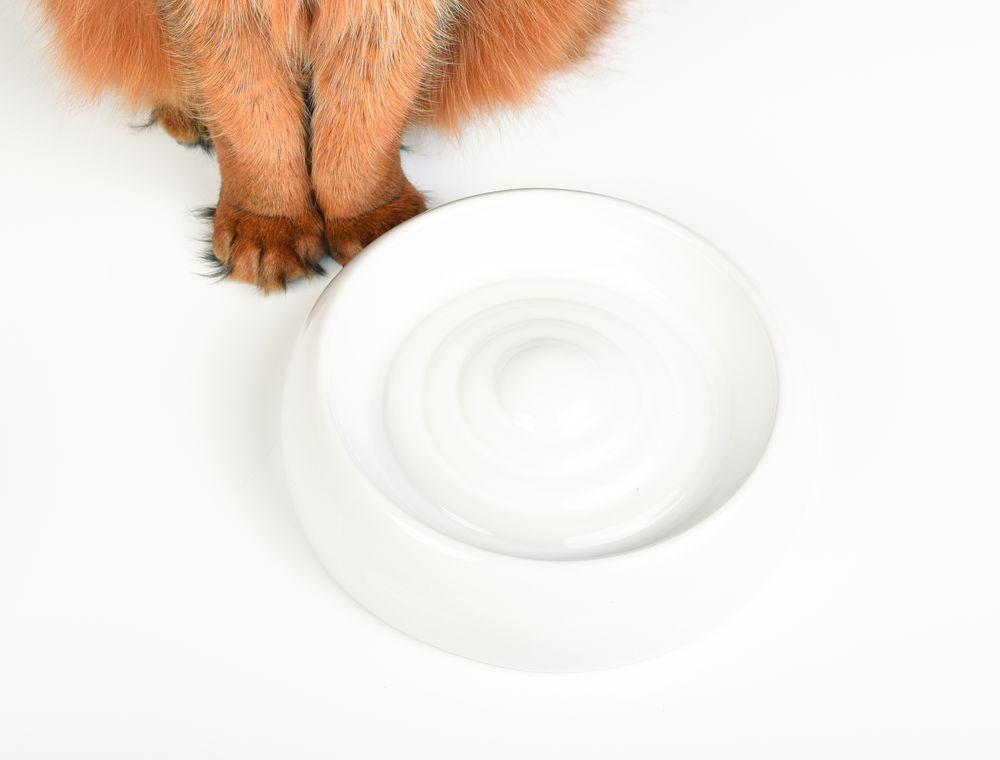 Lucky-Kitty Keramik Katzennapf  M   (∅ 18cm)