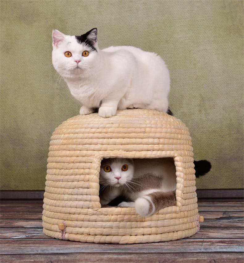 Traditioneller japanischer Katzenkorb  Neko-Chigura  (猫ちぐら)